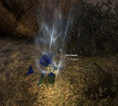 corn-flower-reagent-eso-alchemy