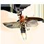 eso-torchbug_thorax
